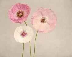 Mohn Blume Fotografie Print, Girls Zimmer, Wand-Dekor Blume Wandkunst, Rosa Mohn, Floral, Hauptdekor, Fine Art Fotografie drucken
