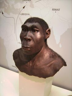 A reconstruction of Homo erectus, the earliest human species that is known to have controlled fire.