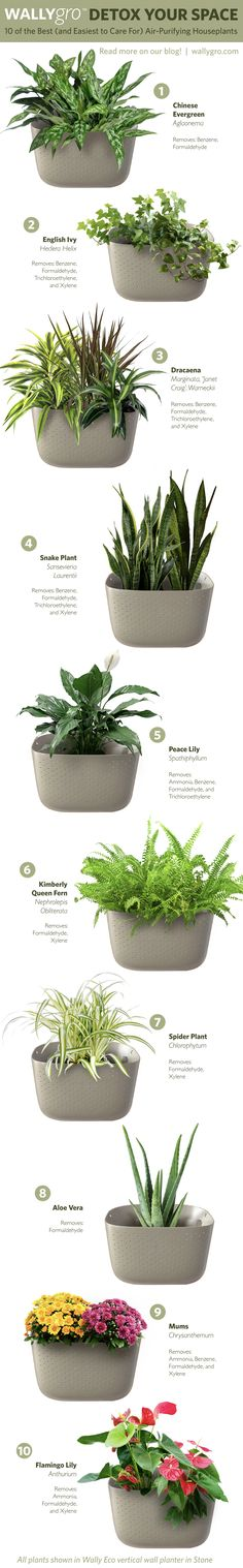 Any plant lover with an urban jungle of their own will tell you that plants really do improve air quality. Adding a vertical garden to your home or office can improve your overall health by eliminating pollutants from the air you breathe. Goodbye, constant sneezing and watery eyes; hello, clean air!