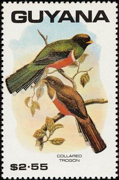 Collared Trogon stamps - mainly images - gallery format