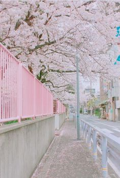 19 Ideas For Sakura Tree Art Landscapes Aesthetic Photo, Pink Aesthetic, Aesthetic Pictures, Korean Aesthetic, Beautiful Places, Beautiful Pictures, Beautiful Scenery, Japan Street, Noragami