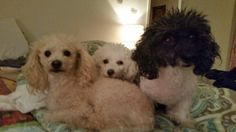 My three dogs I love