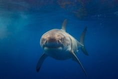 Swimming With Sharks - Who Wants to Join Me?