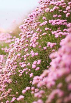 belles images fleurs - Page 7