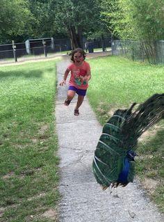Subieron a Internet la Foto de esta niña corriendo en el zoológico y la Trollearon 15 Veces!