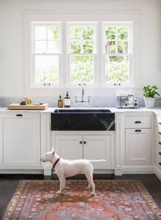 Lottie, the family's mini bull terrier, stands at attention beneath a custom soapstone sink.