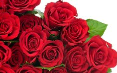 Collection of Rose Flower Wallpaper on HDWallpapers Rose Images Hd Wallpapers Wallpapers)