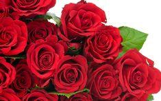Wallpaper rosas rojas