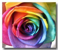 tye dye roses? now i've seen evvvverything!