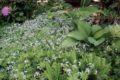 Näin onnistuu varjoisa piha: Kukkatarha valtaa siimeksen