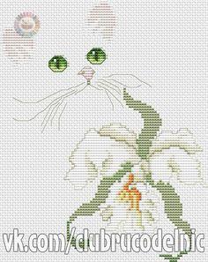 gatto con orchidea-1