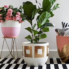 Add some color to with bright pots and green plants. Source: Fox + Box