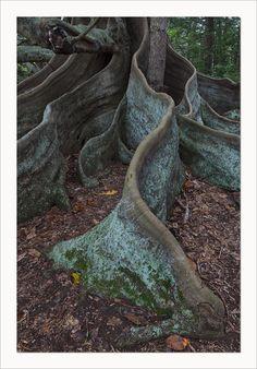 Norfolk Island | Australia (by Mark)