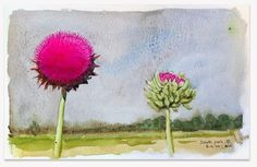 Aude-Noelle Nevius - Blog: Bright thistles