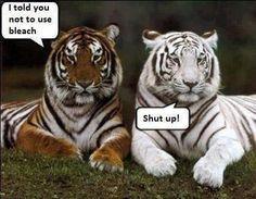 Funny!   lol   Eu lhe disse para não usar  alvejante