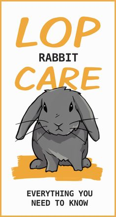 How To Care For Your Lop Eared Rabbit - For the most part lop rabbit care is very similar to their uppity-eared counterparts. However, lop - English Lop Rabbit, French Lop Rabbit, Mini Lop Rabbit, Pet Rabbit, Rabbit Diet, Mini Lop Bunnies, Holland Lop Bunnies, Pet Bunny Rabbits, Cute Bunny