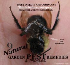 9 Natural Garden Pest & Problem Remedies by organic master gardeners - printable