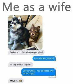 9 Times Wives Told Their Husband That They Now Own A Puppy 9 vezes esposas disseram seu marido que agora possuem um filhote de cachorro Baby Animals, Funny Animals, Cute Animals, Dog Memes, Memes Humor, Funny Cute, Hilarious, Animal Memes, Animal Captions
