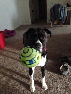 Play w me?