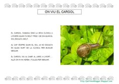 EL CARGOL descobertes - petitmón 1 - Álbumes web de Picasa