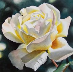 White Rose, original painting by artist Jacqueline Gnott | DailyPainters.com