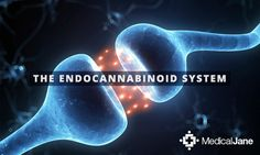 Studies conducted on women afflicted with eating disorders have revealed a deficiency in endocannabinoid levels.