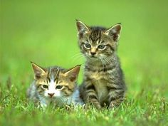 ANIMAUX : CHATS- CATS