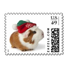 Cute Guinea Pig With Christmas Hat On White Christmas Hat, Christmas Animals, Xmas, Christmas Greeting Cards, Christmas Greetings, Guinea Pig Clothes, Pig Pics, Cute Guinea Pigs, Stamp Collecting