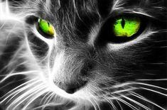 Green Eyed Cat 5D Diamond Painting Kit - 30x40 cm / Round Diamonds