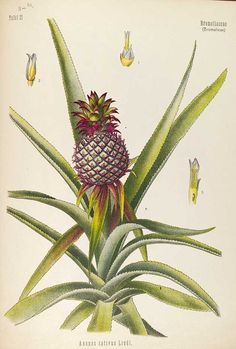 Free vintage botanical medicinal plants in the Public Domain to download.