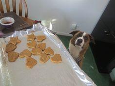 Healthy homemade dog treats (recipe) Dog Beds, Car Dog Bed, Homemade Dog Treats, Pet Treats, Dog Treat Recipes, Dog Food Recipes, Pumpkin Dog Biscuits, Puppy Chow, Dog Mom