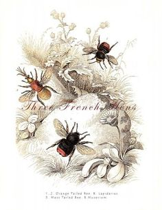 French Bees~image three french hens Can you help? would appreciate your time to help save our bees. http://rt.com/usa/new-pesticides-linked-bee-deaths-130/