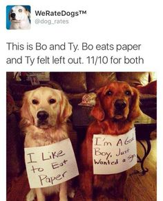"""""""We Rate Dogs"""" Are Hilarious – 16 Pics what is the biggest problem facing and today's horoscope, free pets and classifieds zimbab. Animal Jokes, Funny Animal Memes, Funny Animal Pictures, Funny Dogs, Silly Dogs, Cute Little Animals, Cute Funny Animals, Funny Cute, Hilarious"""