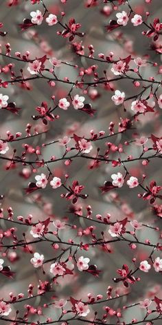 Wall Paper Nature Blumen Ideas For 2019 Tumblr Wallpaper, Floral Wallpaper Iphone, Cute Wallpaper Backgrounds, Aesthetic Iphone Wallpaper, Colorful Wallpaper, Flower Wallpaper, Aesthetic Wallpapers, Cherry Blossom Wallpaper, Floral Wallpapers