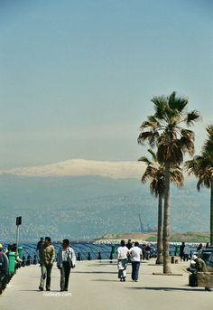 MPOWER/// Beirut Corniche, with snow-capped Mount Lebanon in the Background Travel Around The World, Around The Worlds, Mount Lebanon, Eastern Europe, Christians, Homeland, Middle East, Places Ive Been, Spicy