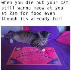 Funny pictures, jokes and funny memes sharing website to make others laugh. Get more funny pictures here. Login and share funny pic to make world laugh. Funniest Cat Memes, Crazy Funny Memes, Wtf Funny, Funny Cute, Funny Jokes, Funny Shit, Funniest Photos, Animal Memes, Funny Animals