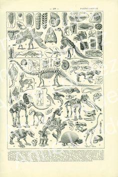 1923 Vintage Paleontology print illustration by annelondez1