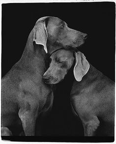 William Wegman, Friends