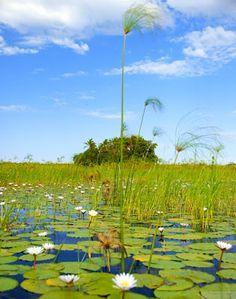 from the Okavango Delta in Botswana