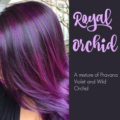 I love purple hair Haircut And Color, Hair Color And Cut, Cool Hair Color, Funky Hair Colors, Colorful Hair, Violet Hair, Dream Hair, Fall Hair, Hair Today