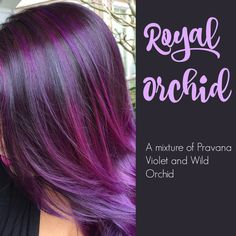 I love purple hair Hair Color Purple, Hair Color And Cut, Haircut And Color, Cool Hair Color, Hair Colors, How To Dye Brown Hair Purple, Orchid Color, Dark Purple, Violet Hair