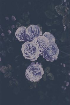 alternative, beatiful, color, cool, cute, dark, flowers, grunge, hipster, indie, inspiration, love, lovely, meow, nature, pale, pastel, photography, pretty, purple, retro, rose, sadness, soft grunge, style, vintage, wallpaper, First Set on Favim.com