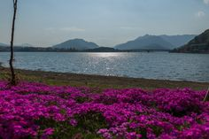 https://flic.kr/p/rCWurP | Lake Kawaguchi
