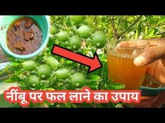 In this Video We are Going to make a home made fertilizer for plant that for get more fruits on lemon plants lemon care . Home Made Fertilizer, Puttu Recipe, Homemade Wall Art, Lemon Plant, Agriculture, Farming, Garden Crafts, Low Lights, Plant Care