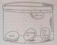 Egg guide