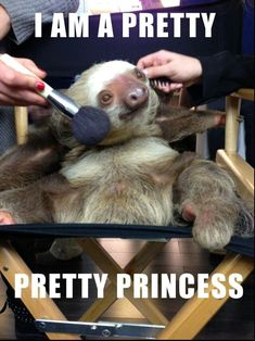 Pretty sloth                                                                                                                                                      More