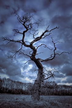 Winter Tree #2 by Andy Stafford, via Flickr.