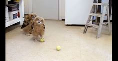 WHOOOOOO Wants To Play? Two Owls At A Bird Sanctuary Do!   The Animal Rescue Site Blog
