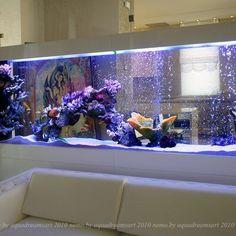 Ein Einblick in das Leben von Pictus Catfish - 🌏Worldwide DIY Design - . Aquarium Mural, Aquarium Stand, Aquarium Design, Marine Aquarium, Reef Aquarium, Aquarium Fish Tank, Cool Fish Tanks, Saltwater Fish Tanks, Saltwater Aquarium
