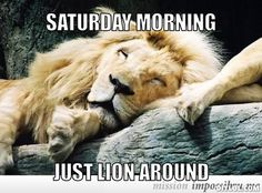 Happy Saturday! You could lay around all day, or you could get up and do something with the day that you will be proud of.  Start off by getting in a great workout!
